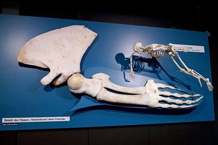 Animals Are Way Bigger Than We Think (Photos) 24