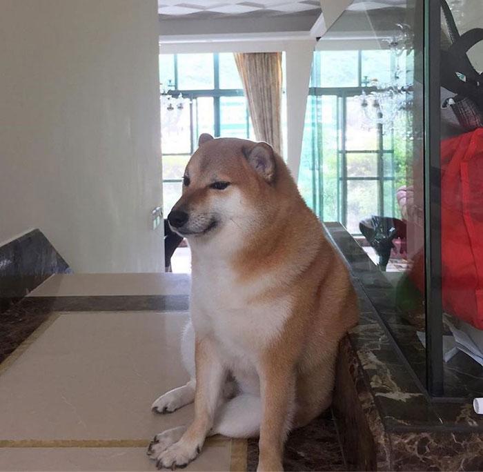 Dog Meme Templates Imgflip