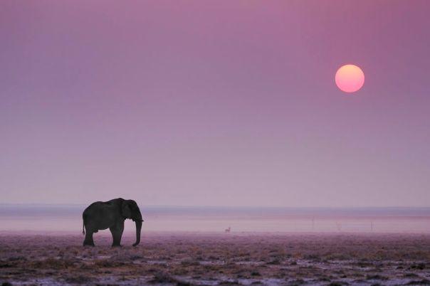 Elephant Sunset, Etosha Pan, Namibia
