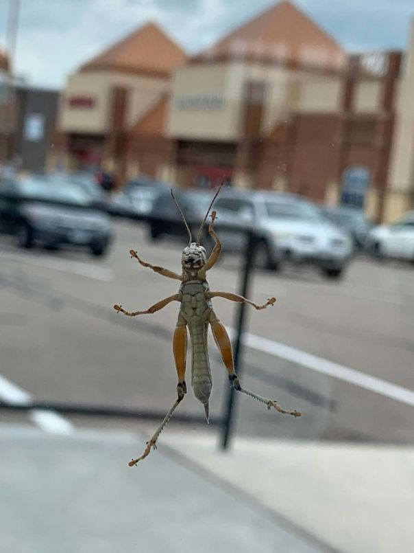 The Thorax Of This Bug Looks Like A Cat With Sunglasses