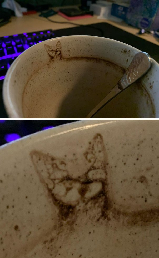 My Wife's Hot Chocolate Was Visited By A Mysterious Cat