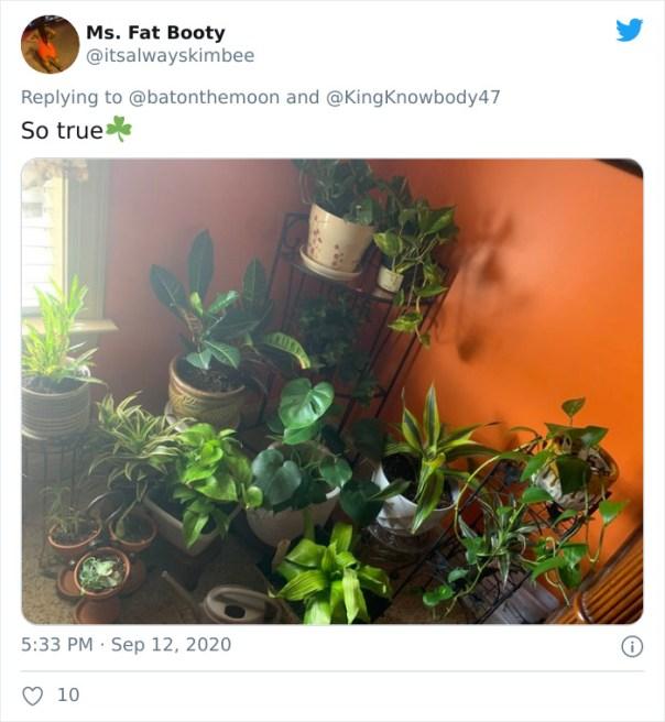 Low-Sunlight-House-Plants