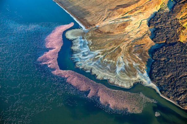 Nature Category Runner-Up: Flamingos At Lake Logipi