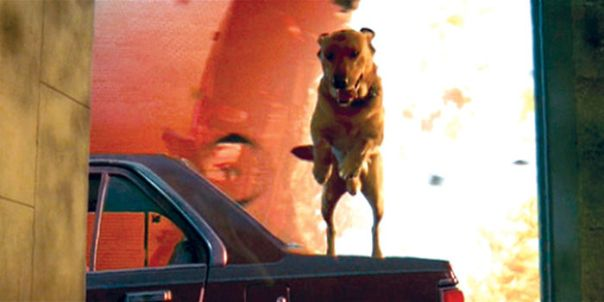 In Independence Day (1996) The Dog Boomer Survives, Which Makes Him An Ok Boomer