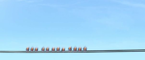 In Cars, You Can See (And Hear) Birds From Pixar's Short Film For The Birds