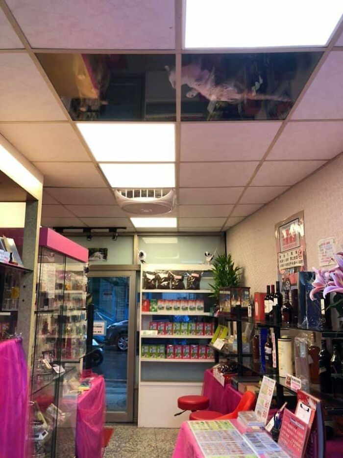 shop owner installed a glass ceiling