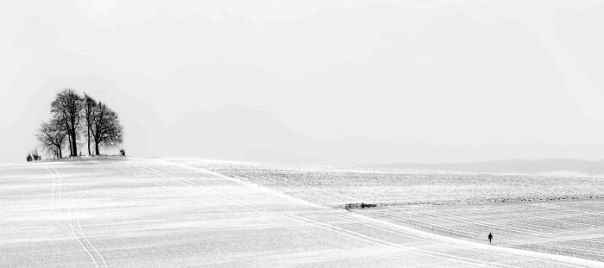 Black And White Commended: Graham Norton, 'Lonely Walk', Berkshire