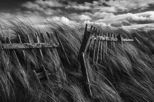 Black And White Commended: Jamie Williamson, 'Shaped By Wind And Wave', North Ayrshire