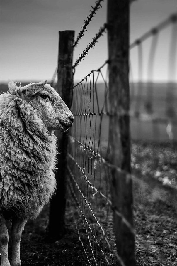 Youth Lpoty Winner: Joshua Elphick, 'Counting Sheep', Sussex