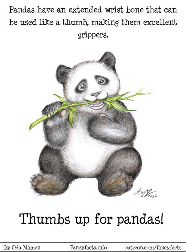 Go Pandas!