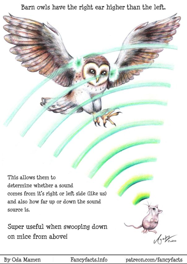 Owl Hearing