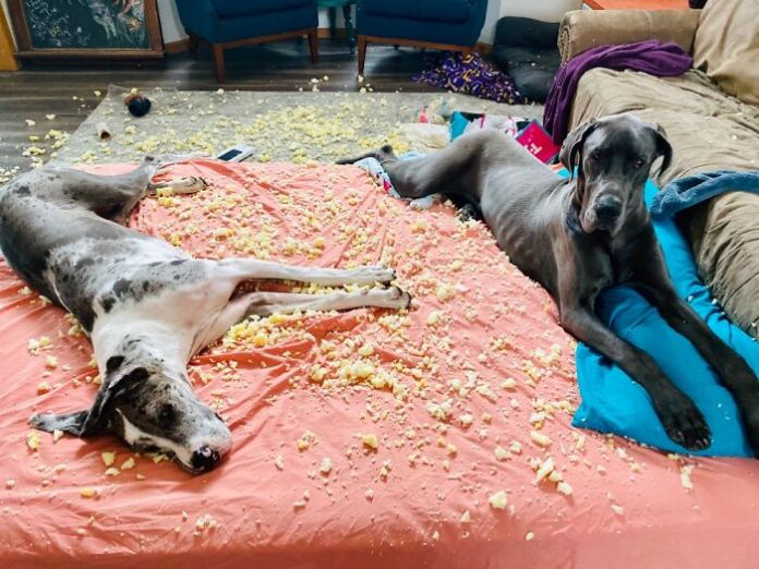 Their Humans Weren't Invited To The Pillow Fight!