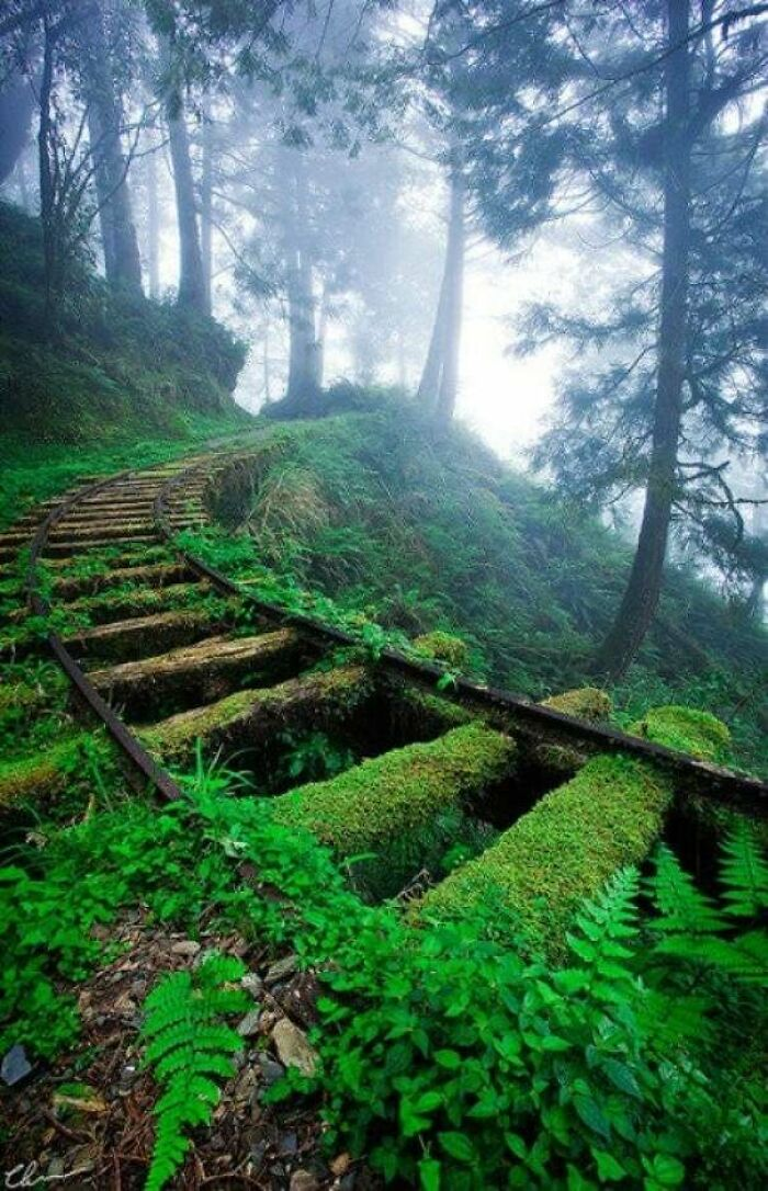 Railroad Tracks In Forest