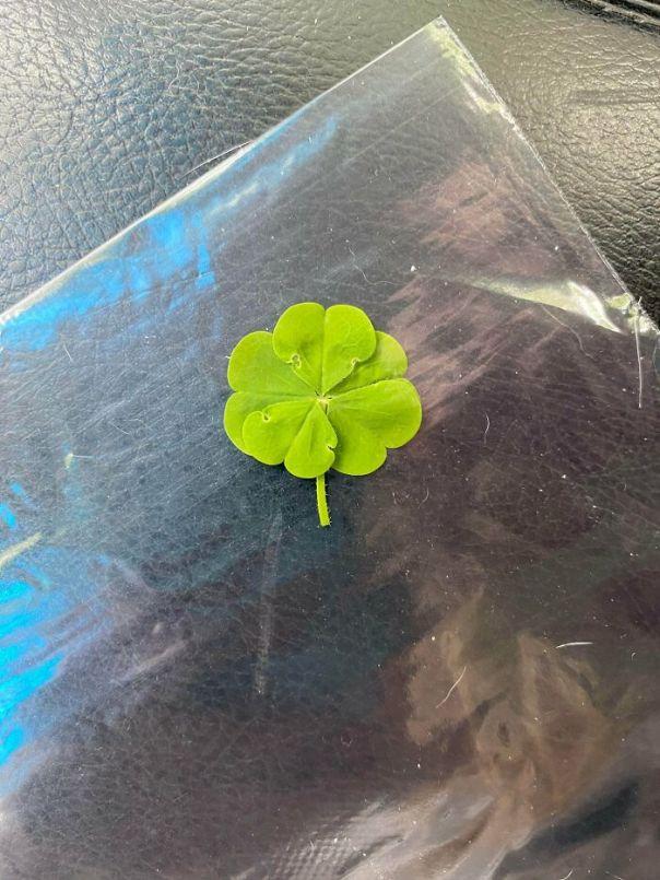 I Found A 5 Leaf Clover!
