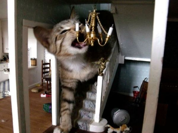 This Cat Is Destroying A House. A Doll House