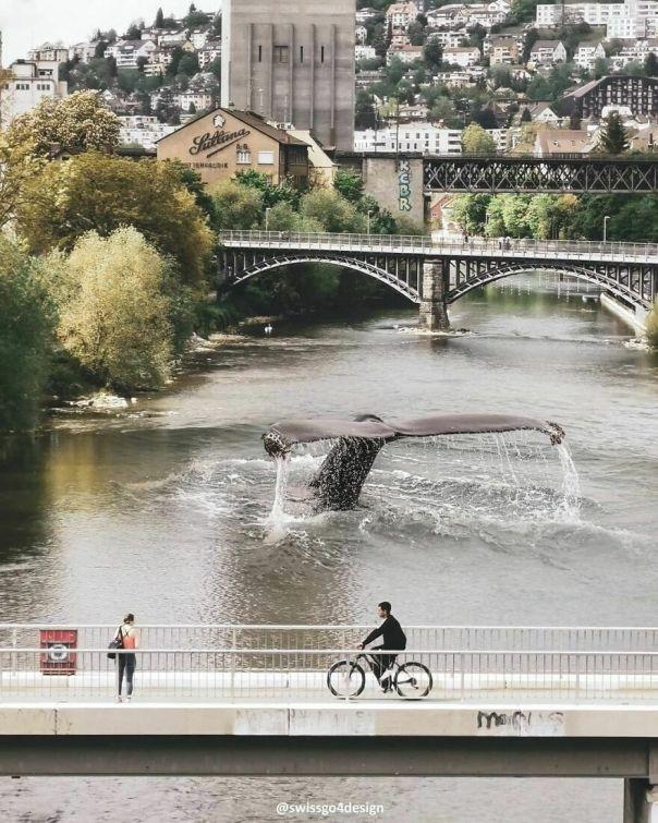 Whale Watching In Zurich, Switzerland . . op @swissgo4design @pixabay . . #dailyart #9gag #beyondsurreal #trippyart #theuniversalart #thephotoviers #thecreativers #thecreart #thecreatart #xceptionaledits #launchdsigns #whalewatching #visitzurich #myswitzerland #beforv #creatingfromhome #creativecloud_balance #creartmood #digitallyart #discoveredit #enterimagination #learnphotoshop #fxcreatives #milliondollarvisuals #manipulationteam #artbasel #ps_float #creativecloud_immersed #launchdsigns_shark
