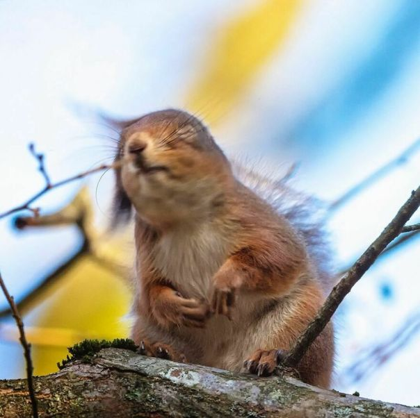 I Love The Smell Of Nuts In The Morning. It Smells Like Victory