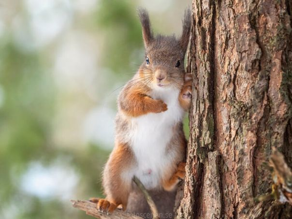 I Pledge Allegiance To The Nuts Of America