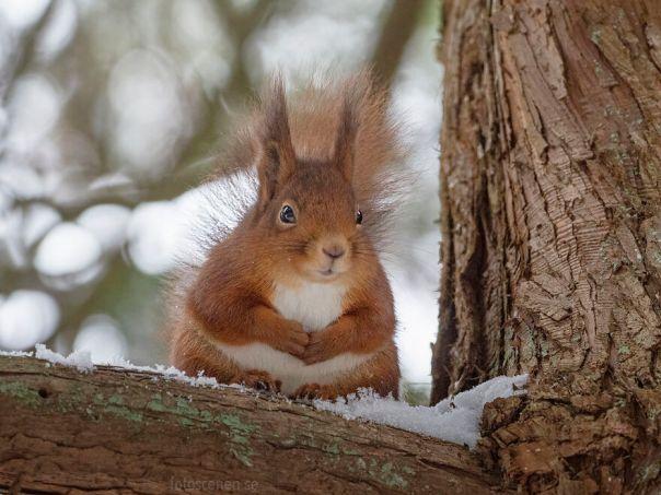 The Sitting Squirrel
