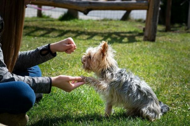 Vets-Share-Things-About-Pets