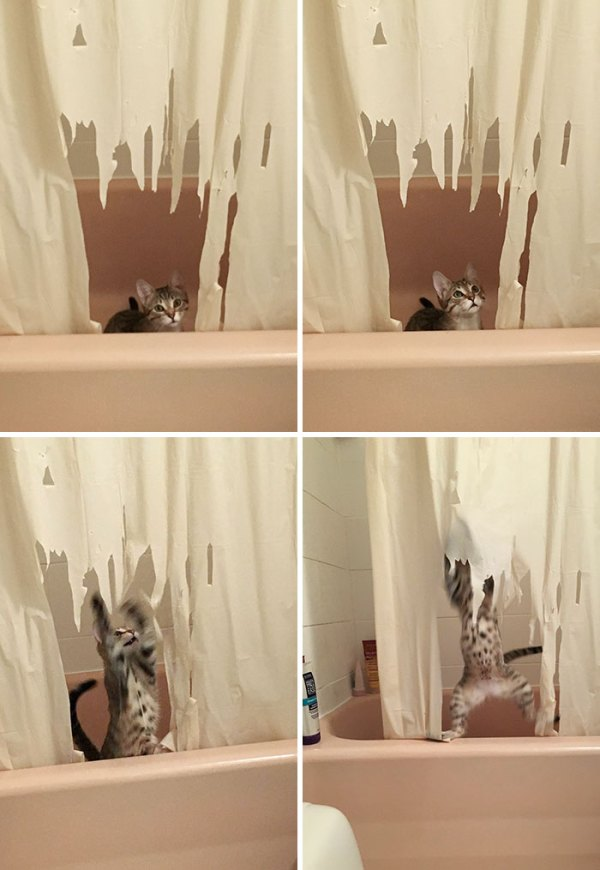She Looked Guilty For A Split Second, Then Continued With Her Rampage