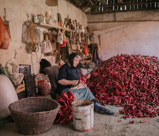 Serbia Winner: 'Serbia's Red Gold Pepper Harvest', By Vladimir Zivojinovic