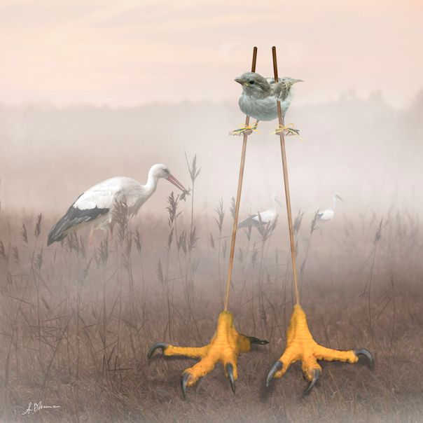 The Biggest Bird