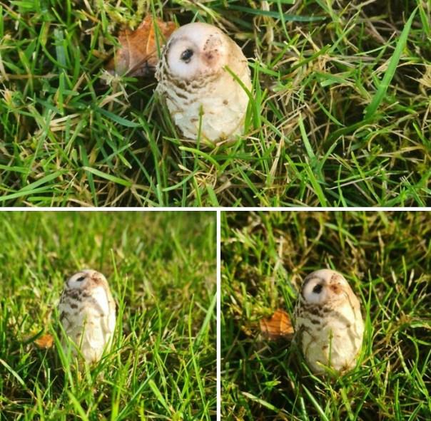 I Found A Mushroom That Looks Like A Little Owl