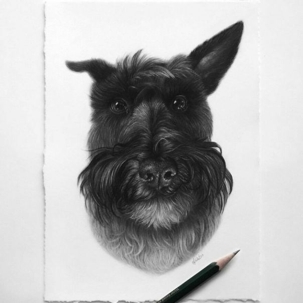 This Artist Makes Realistic Portraits Of Animals That Will Leave You Jaw-Dropping