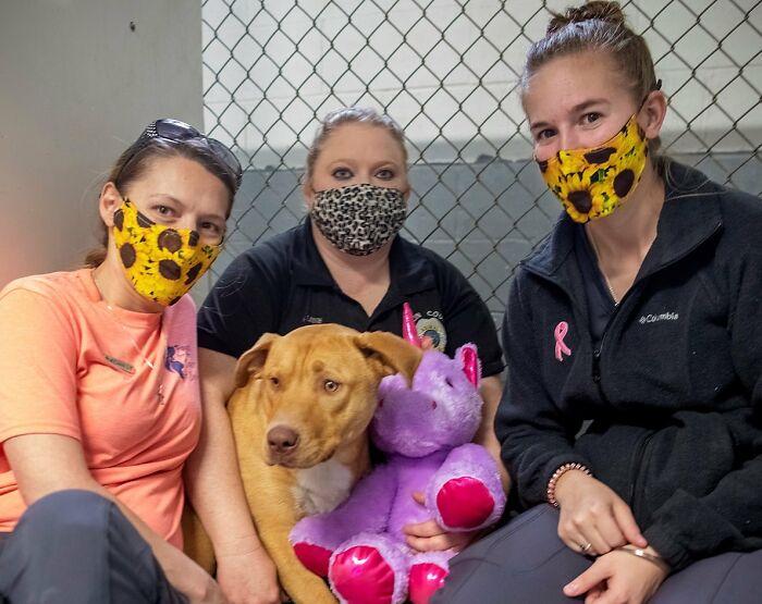 Um cachorro vadio que continuou tentando roubar um unicórnio roxo de uma loja ganha um brinquedo e uma casa para sempre