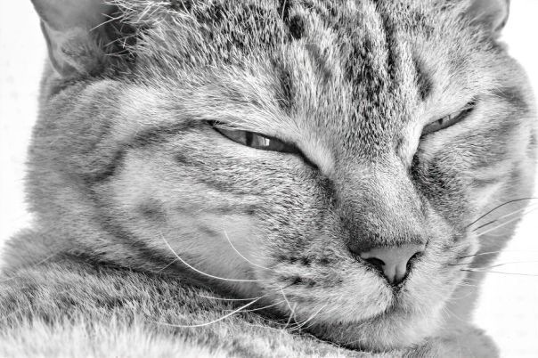 There Aren't Enough Black And White Photographs Of Cats, Nor Can There Be, So Here Are Mine
