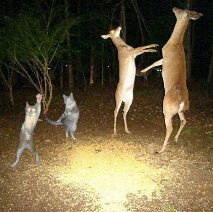 Weird-Animal-Pics-Cant-Be-Explained