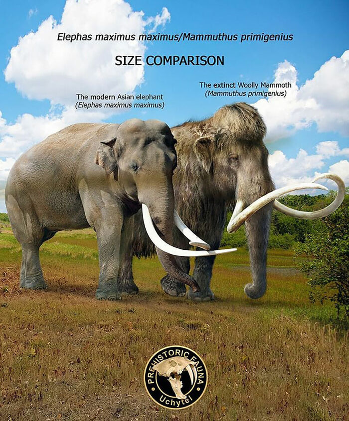 39 Visual Comparisons Of The Size Of Long-Extinct Animals With Their Modern Relatives