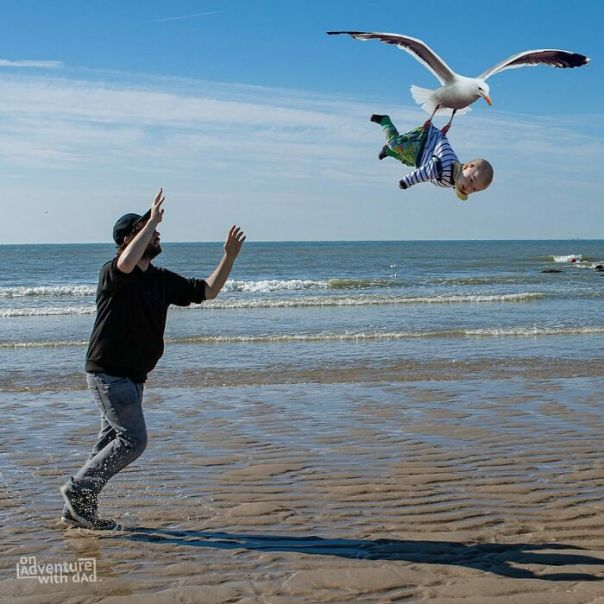 We Spend Two Days At The Belgian Coastline. Apparently There Are A Couple Of Aggressive Seagulls There. If Someone Finds Their Nest With Aster In It, Please Let Me Know