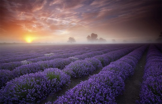 50 Mind Blowing Examples of Landscape Photography   Bored Panda 1  Lavender Sunrise