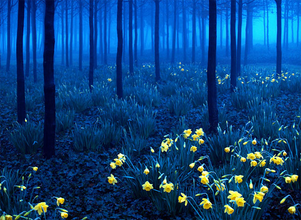 Image result for blue yellow photography
