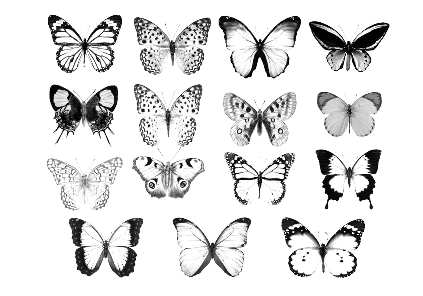 Butterfly Silhouette Free Brushes