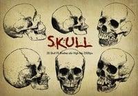 "20 Cráneo PS Brushes ABR vol.6 ""grabado"""