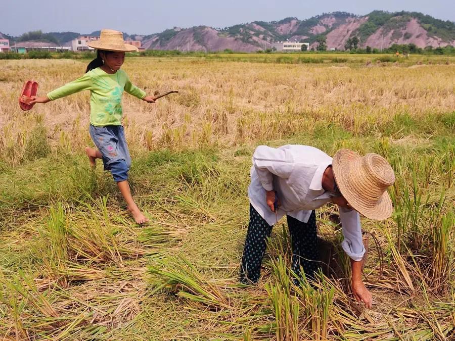 Невозможность ипотеки земель может стоить Китаю большой, так как она удерживает фермеров от выращивания своего бизнеса от меньшего уровня эксплуатации семья промышленного сельского хозяйства.