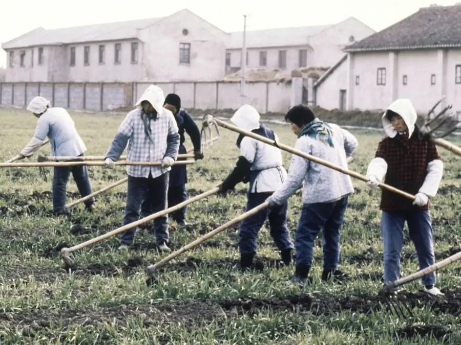 Несмотря на то, что агитационные плакаты предложили, сельскохозяйственного производства упал на 30% в период между 1959 и 1961 и 45 миллионов человек умерли от голода.