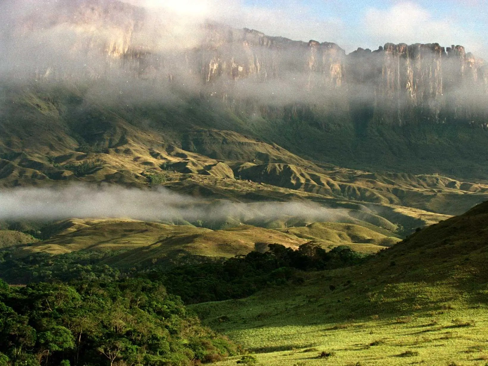 Image result for Rainforests of Atsinanana