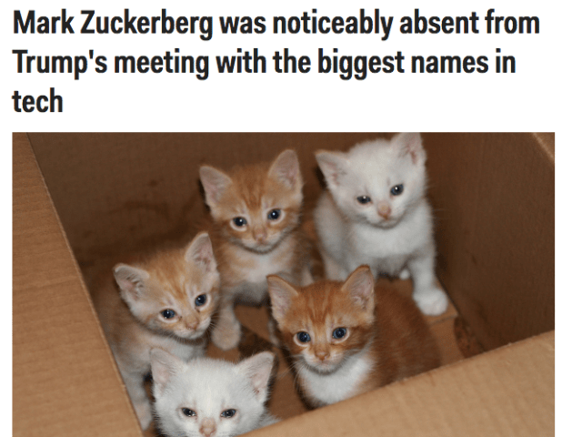 It looks as though Trump's tech meeting yesterday took place inside a cardboard box. These kittens don't seem happy to be there.