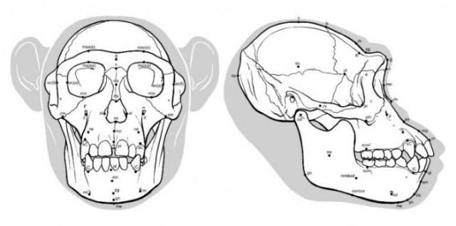 Ancient-Hominid-Reconstruction-777x385.jpg