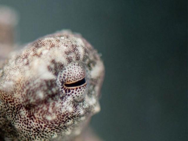 Octopus-Eye-777x583.jpg