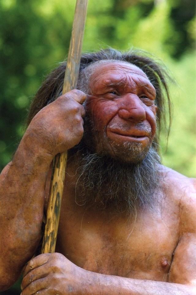 796px-Homo_sapiens_neanderthalensis-Mr._N.jpg