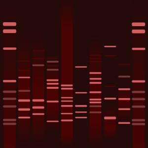Chocolate DNA