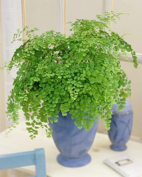 17 Plantes D Interieur Qui Poussent Sans Lumiere Du Soleil