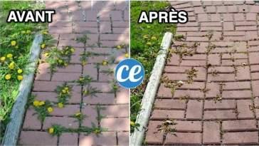Comment Éliminer les Mauvaises Herbes Entre Les Dalles SANS EFFORT.