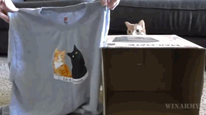 une niche pour chat avec un t shirt