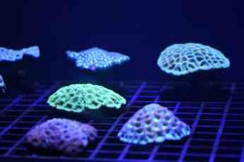 Loro Parque exhibe una increíble granja de corales